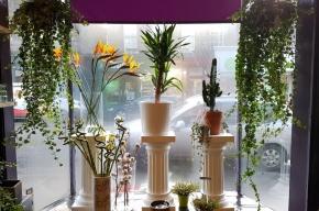 Banks florists window - Valentine's Day in Edinburgh