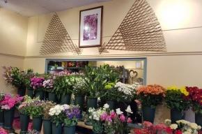Simpsons florist display - Valentine's Day in Edinburgh